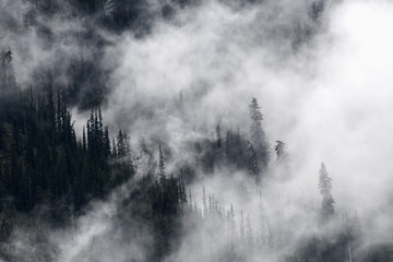 Mountain mist rises through evergreen trees after a rainfall