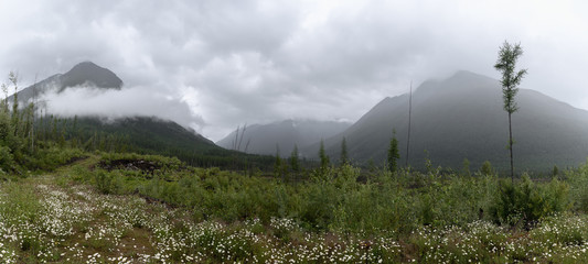 Canadian wilderness and deforestation on a stormy day in British Columbia Wall mural