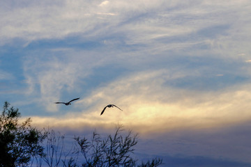 Silhouette of Birds flying over a lake at sunset with clouds
