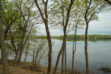Scenic woods along a lake in Minnesota