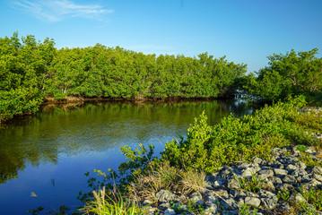 """Waterway at J. N. """"Ding"""" Darling National Wildlife Refuge"""