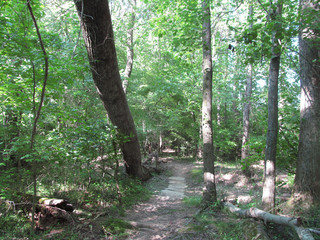Hiking and Biking Outdoors in the Park 0