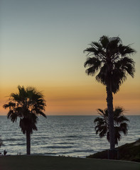 Dusk sky view of the Pacific Ocean with palm tree silhouette
