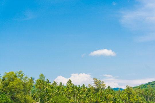 Coconut palm tree blue sky background