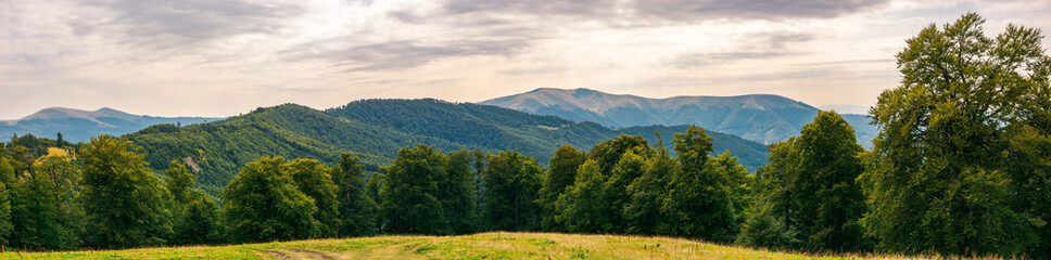 gorgeous mountain panorama in summer afternoon. primeval beech forest around alpine meadow. distant ridge beneath the cloudy sky