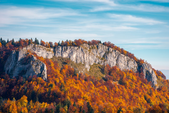 steep rocky cliff above the forest in reddish foliage. beautiful nature background