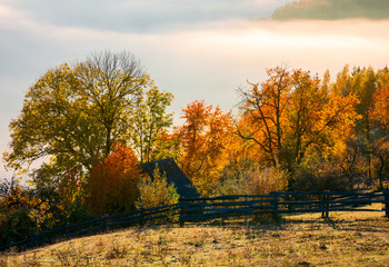 orchard in colorful foliage. beautiful rural scenery in mountains at foggy sunrise