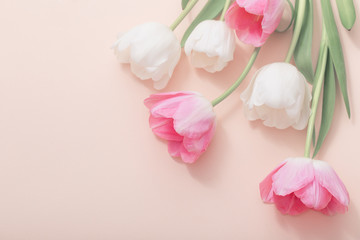 pink and white tulips on paper background