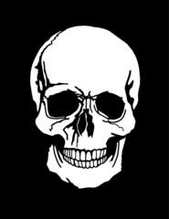 A human skull illustration white on a black background