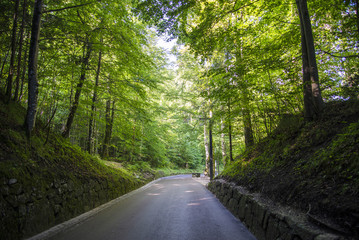 road passing in the middle of the forest surrounded by trees