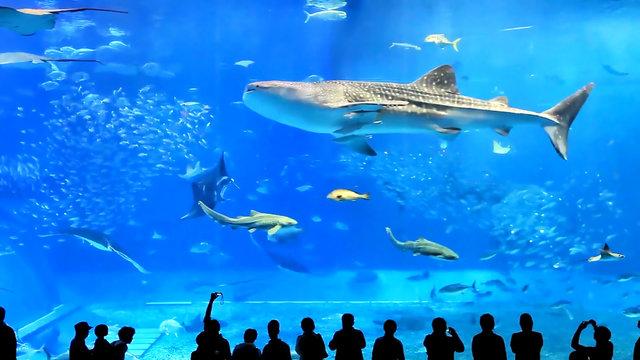 full frame shoot of aquarium tank at okinawa