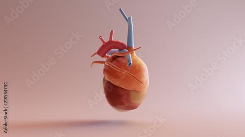 Human Anatomical Heart Model 3d illustration 3d render