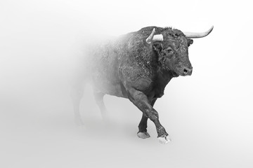 Wall Mural - Bull or taurus  european wildlife animal art collection grayscale white edition