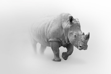 Wall Mural - Rhino africa wildlife animal art collection grayscale white edition