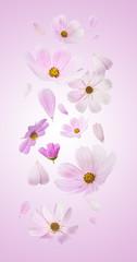 Beautiful flying pastel pink flowers
