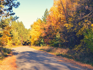 Asphalt path for jogging in the autumn park