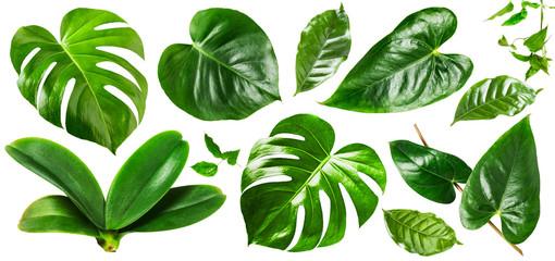 Jungle green leaves