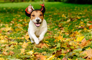 Dog in Halloween costume of funny spooky devil at autumn park