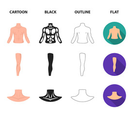 Torso, leg, neck and buttocks. Body parts set collection icons in cartoon,black,outline,flat style vector symbol stock illustration web.