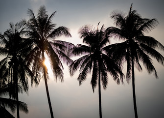 silhouette of coconut palm trees on sun set