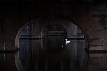 A swan passes by under the Cech Bridge in Prague