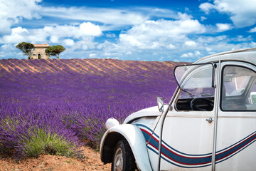 Stores photo Prune old french car in front of lavender field in provence france colorful purple closeup macro shot agriculture background