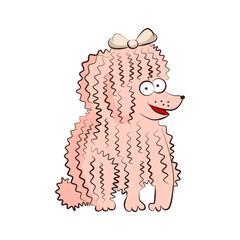 Poodle vector breed dog illustration. Cartoon funny pet character sittind on floor
