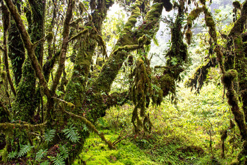 Rain forest with trees