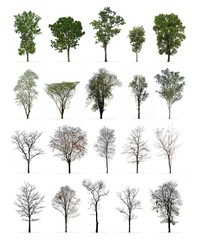 Set of spring and winter trees isolated on white background : Different kinds of tree collection