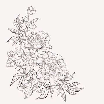 Blossoming peony flowers on white with wildflowers. Vector illustration. Perfect for background greeting cards and invitations of the wedding, birthday, Valentine's Day, Mother's Day.