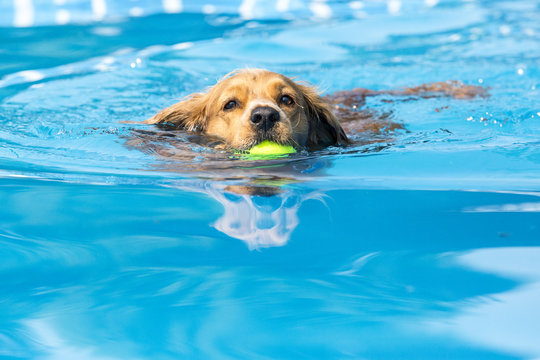 Dog retrieving a toy and playing in pool at splash challenge