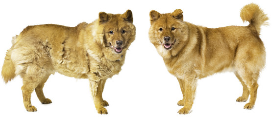 Dog shedding - dog groomed