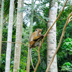 A funny monkey sits on a tree branch in a natural jungle.