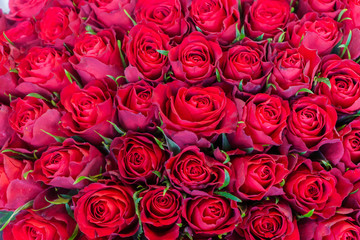 an armful of red, fresh roses in a bouquet