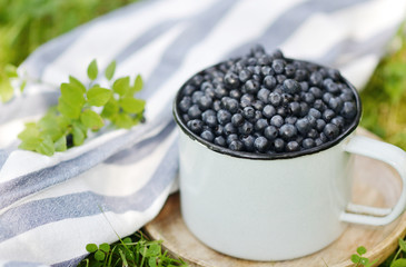 Fresh organic wild blueberries in old retro cup,  green grass, summer harvest, healthy food