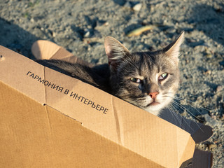 Traditional Ukrainian tabby cat hiding playfully in cardboard box on rough outdoors floor