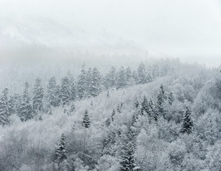 Snow covered mixed forest on the hill
