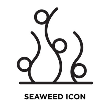 Seaweed icon vector isolated on white background, Seaweed sign , line symbol or linear element design in outline style