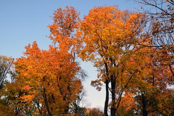 Fototapeta Jesień w parku. Liście, drzewa. obraz