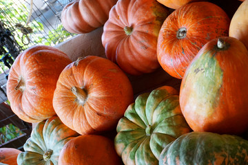 Many of pumpkins in vegetable shop