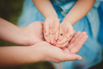 detail of child hands holding a ladybird