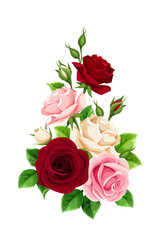 Vector pink, burgundy and white roses isolated on a white background.