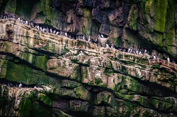 Cliffs with birds around John O´Groats, Northern Scotland