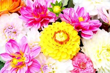 Herbstblumen - Sommerblumen - Dahlien