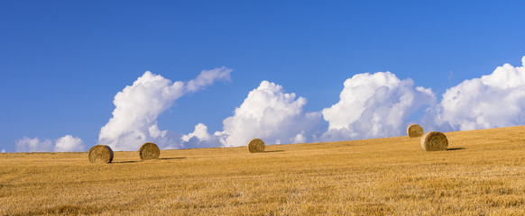Fototapete - 丘の町・美瑛の麦畑