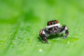 Macro background spider