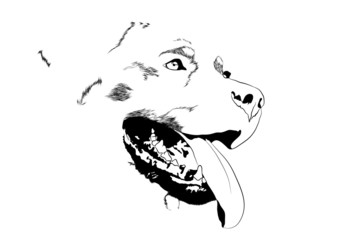 dog rottweiler open mouth tongueout