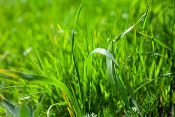 Close-up of green grass in summer
