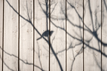 The shadow of a bird sitting in a  skeletal tree on a cream fence