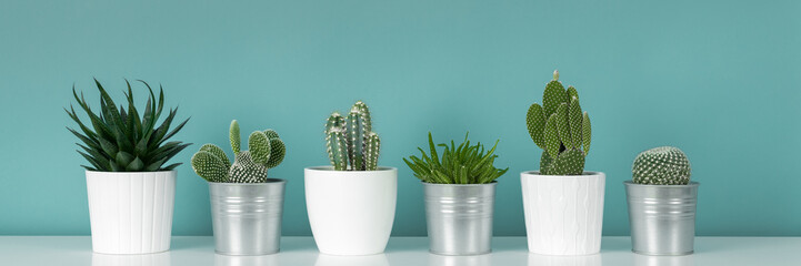 Foto op Plexiglas Cactus Modern room decoration. Collection of various potted cactus and succulent plants on white shelf against pastel turquoise colored wall. House plants banner.